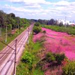 Розовая дорога