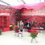 Выставка цветов в Галантусе-2018 в Каулге