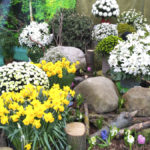 Выставка цветов в Галантусе-2018